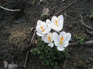 1stflowers
